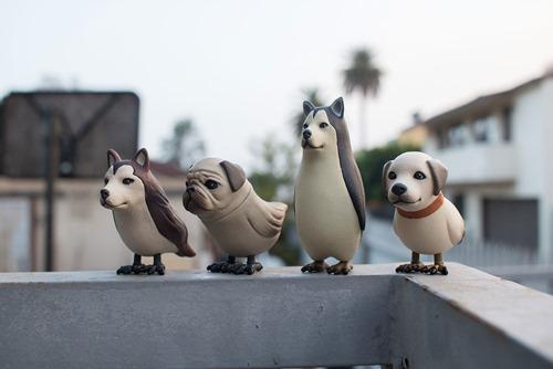 dogbird1
